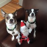 Babalu and McGillicuddy Raleigh Pet Sitters