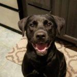 Deacon Testimonial raleigh pet sitters