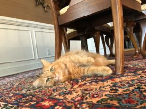 Minimize Your Pet's Stress - relaxed cat under the table