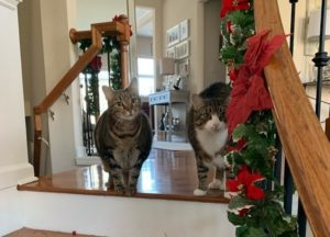 Cats at the holidays - pet gifts