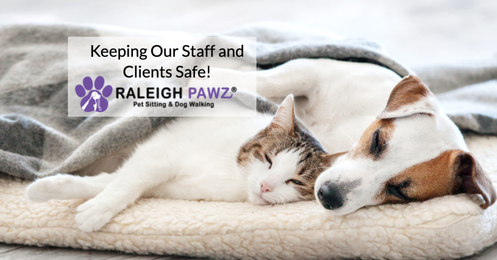 Safety - Cat and Dog sleeping securely together