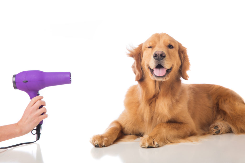 in-home pet grooming image of dog with hair dryer