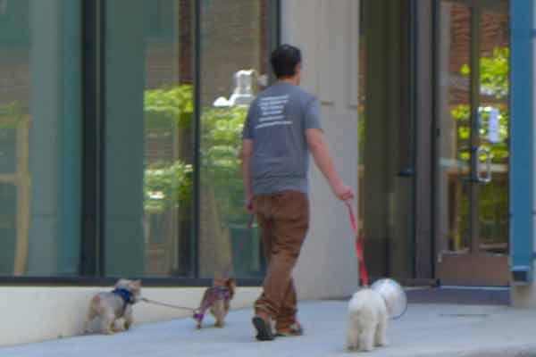 dog-walking-104